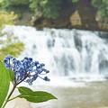 紫陽花と雨と滝と