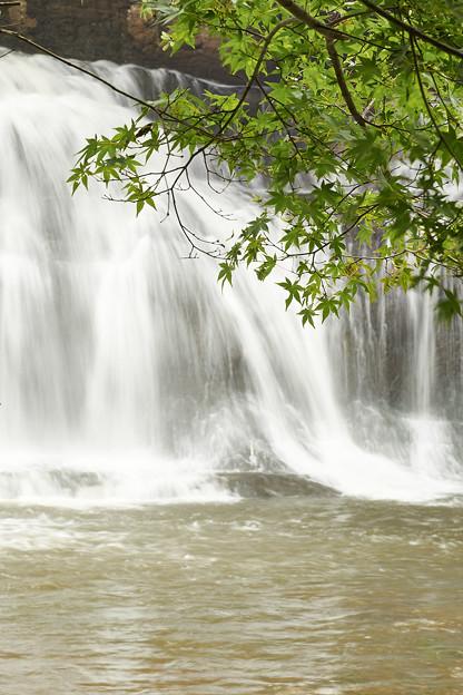 初夏の紅葉と滝