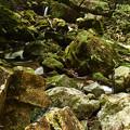 Photos: 滝までもくもくと進む