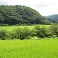 写真: 新穂ダム (1)