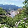 Photos: あじさい祭り2015.06-27