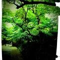 写真: 京都の新緑、紅葉と言えば常寂光寺