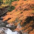写真: 紅葉に高揚