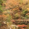 写真: 秋真っ盛り