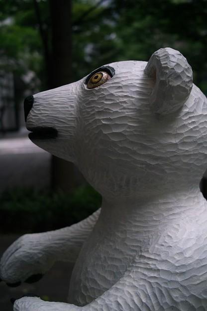 白熊の横顔