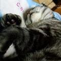 Photos: 雨の日の猫はすこぶる眠い。