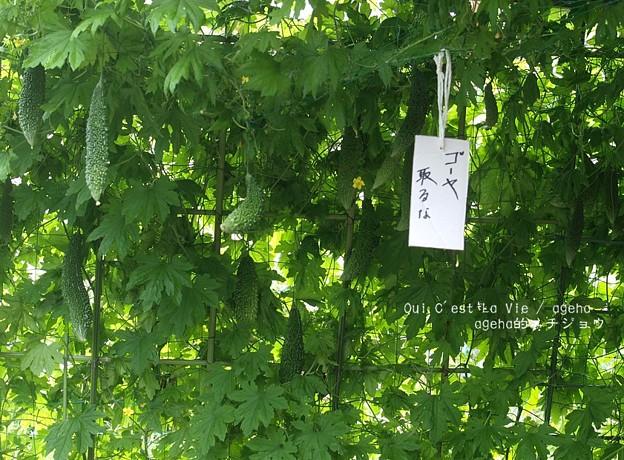 Photos: 夏の風物詩。