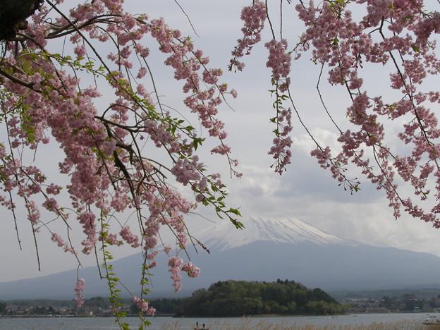 写真: 春惜しむ雲かかりたる富士の山