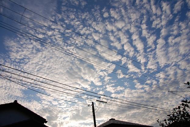 ちりめんのような雲