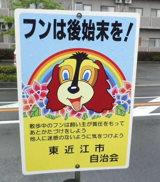 犬糞 ~東近江市1