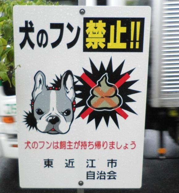 犬糞 ~東近江市2