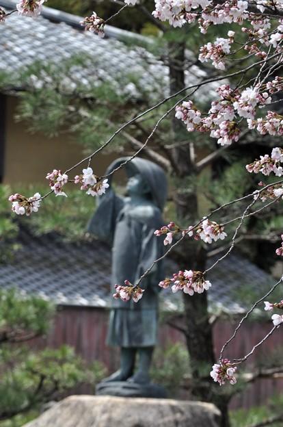 旅の絵師 ふと仰ぎ見る 桜かな