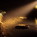 Photos: 川面を照らして