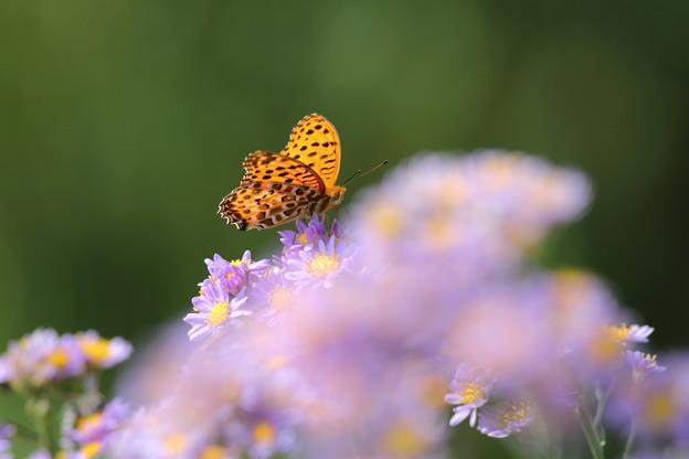 Photos: 紫苑の雲~♪