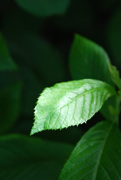 Green 6-27-15