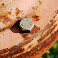 Rust and Green