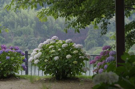 倉敷市種松山の紫陽花