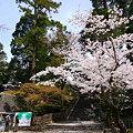 写真: 円覚寺