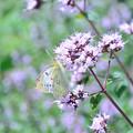 Photos: 動物園で蝶を追う。。。。