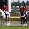 写真: 東京競馬場 誘導馬_3(15/05/23)