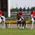 写真: 東京競馬場 誘導馬_4(15/05/23)