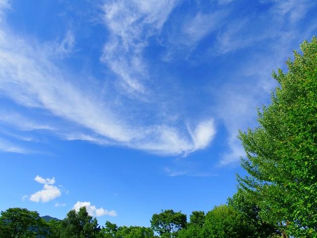 軽やかな雲