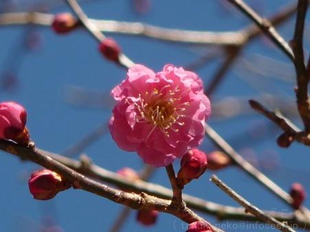 120208-荏柄天神社 (4)