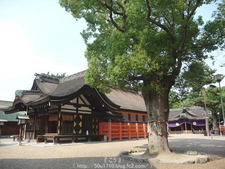 150615-住吉大社 (22)