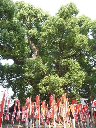 150615-住吉大社 (28)