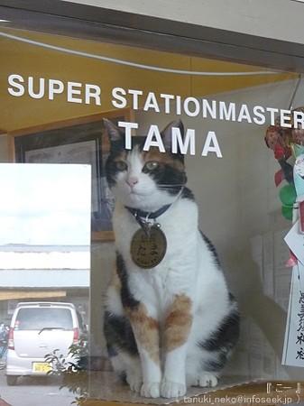 09828 喜志駅 たま駅長 (6)