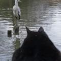 哺乳類VS鳥類