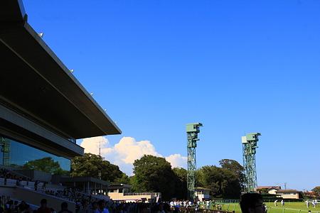 中山競馬場の夏