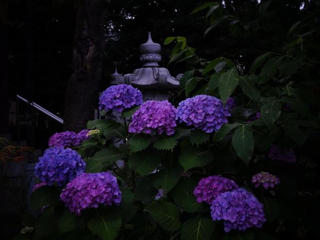 椎名町天祖神社