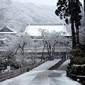 Photos: 円覚寺境内奥20120229
