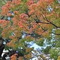 合浦公園・紅葉03-11.10.19