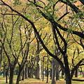合浦公園・紅葉04-11.10.19