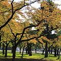 合浦公園・紅葉05-11.10.19