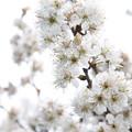 Photos: 春の到来