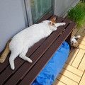 Photos: 猛暑ベランダ編