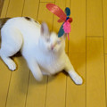 Photos: 猫ドリル失敗
