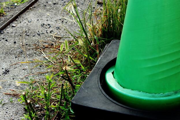路傍の草7