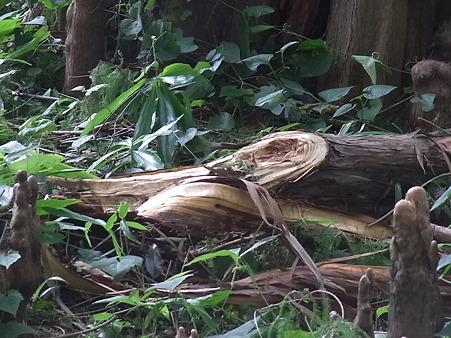 台風の傷1