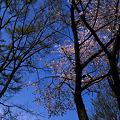 Photos: _1010621r2