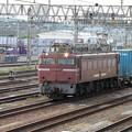 Photos: EF 81 403 貨物