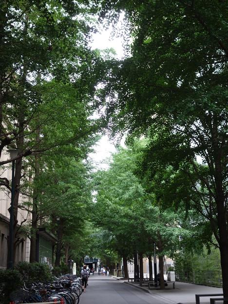 早稲田大学構内 (新宿区西早稲田)