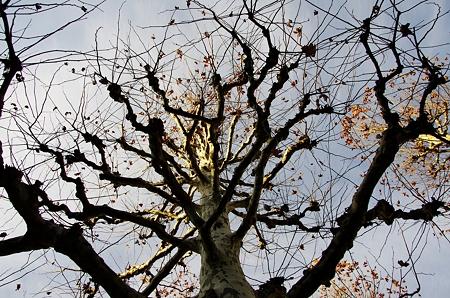 枝葉末節。