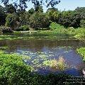 Photos: 柿田川中流域の景色
