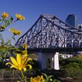 Photos: Story bridge2