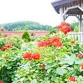 写真: 20110730_162242