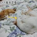 Photos: もしも~し?